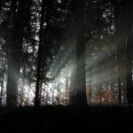La luz que llega